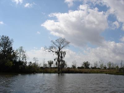 Swamp Tours New Orleans Lafitte