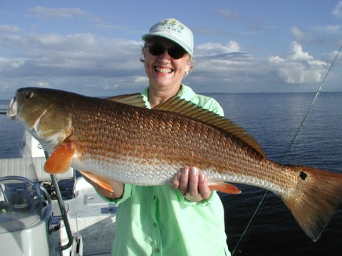 New orleans fishing charter guide service jean lafitte for Fishing in la